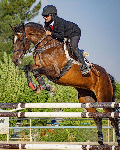 شرط بندی در اسب دوانی - معرفی انواع شرط بندی مسابقات اسب سواری
