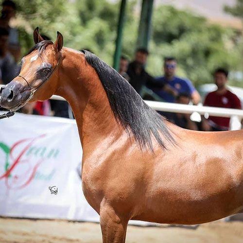 نکات برتر افزایش سودآوری شرط بندی مسابقه اسب سواری